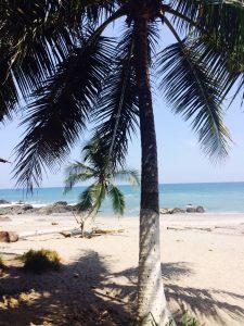 Montezuma Beach Palmtree