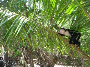 Monkey, Manuel Antonio National Park, Costa Rica